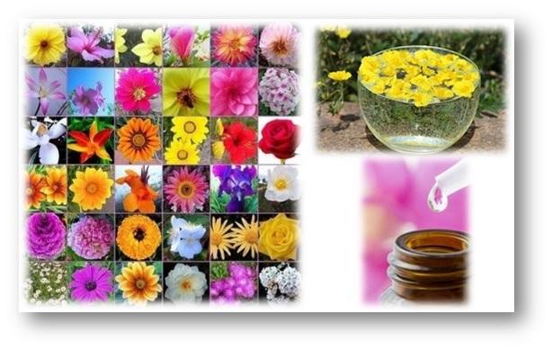 Remedios Florales